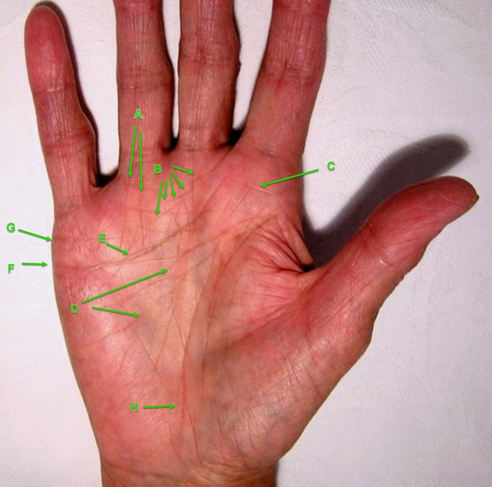 palmistry, hand reading, life line, fate line, relationship lines